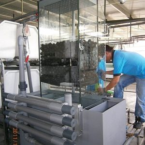 Water purification system for fish breeding